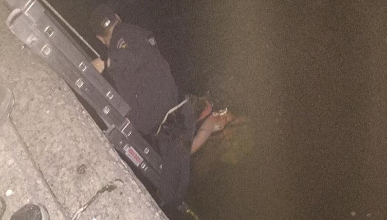 Полицейский спас упавшую женщину с набережной Крюкова в попытке сделать селфи