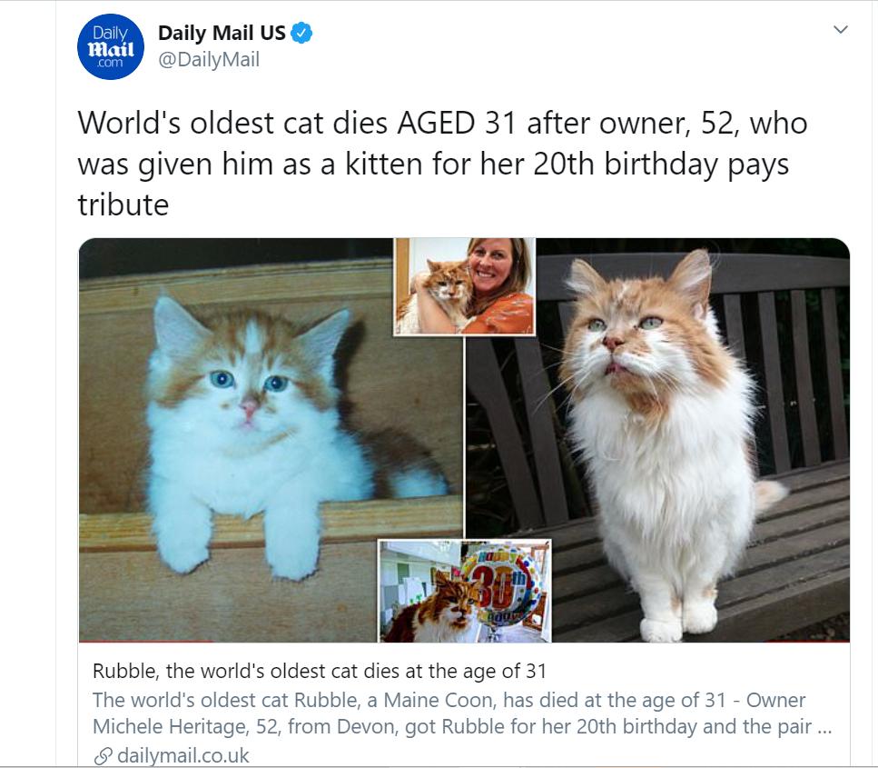 В Британии скончался самый старый кот в мире, ему был 31 год