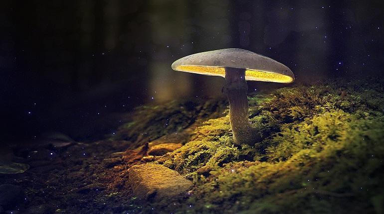 Российские учёные объяснили, почему светятся грибы