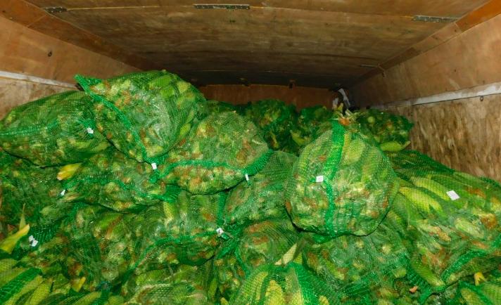 В Петербург завезли 28 тонн початков белорусской кукурузы