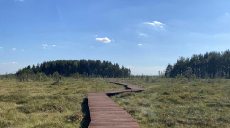 В заказнике «Сестрорецкое болото» открыли экотропу