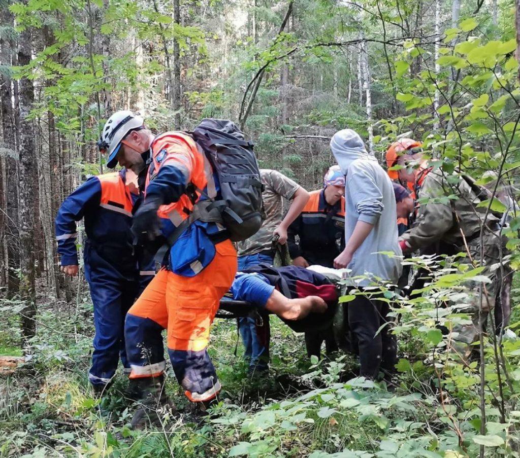 В лесах Петербурга с лета насчитали 900 «потеряшек»