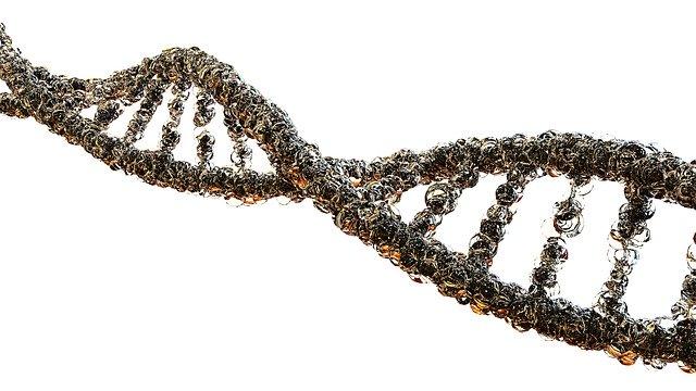 Учёные: расизм передаётся по наследству