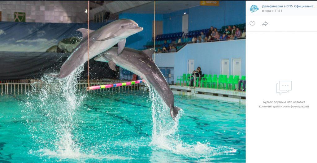 Мойка78 показывает, куда можно отвезти ребенка посмотреть на дельфинов