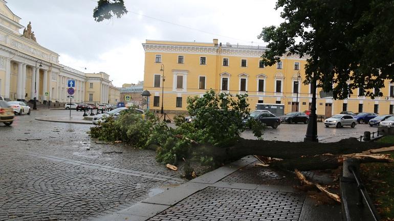 Последствия урагана. Фото: Комитет по благоустройству
