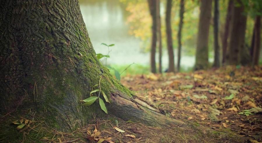 Лес в Гатчине. Фото: Рixabay