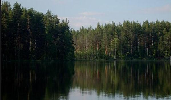 Прокуратура Ленобласти предотвратила самозахват земли в Приозерском районе