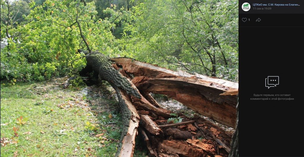 Пятничный шторм повалил и сломал 20 деревьев в ЦПКиО, кто всё уберёт