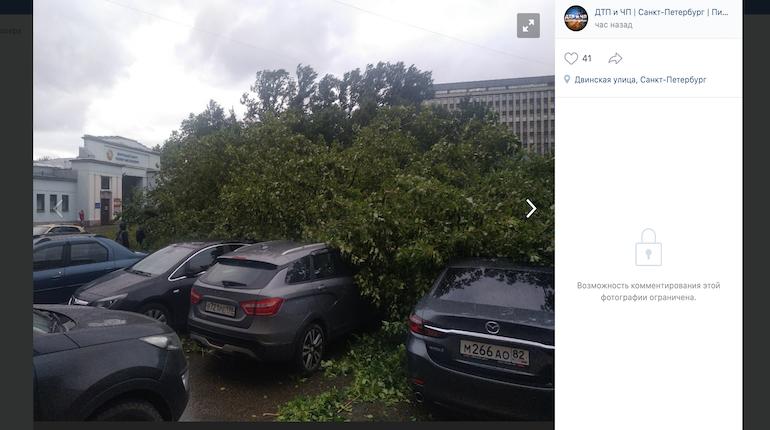 Как Петербург подготовился к осенним ураганам: падающие деревья, летающие леса