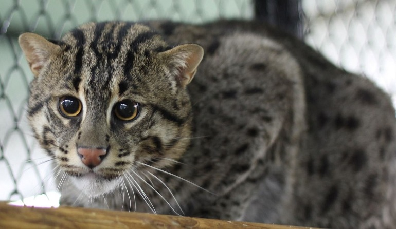 Два виверровых кота прошли ветеринарный контроль в грузовом терминале аэропорта Пулково.