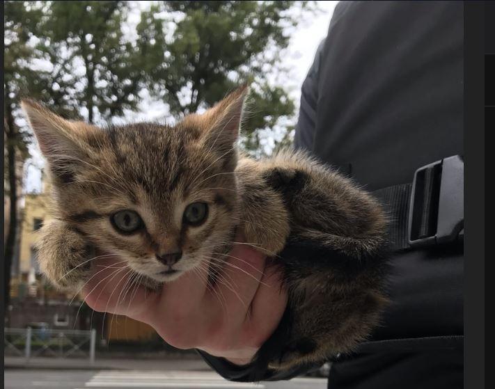 Водитель трамвая и полиция помогли мужчине на Куйбышева спасти котёнка