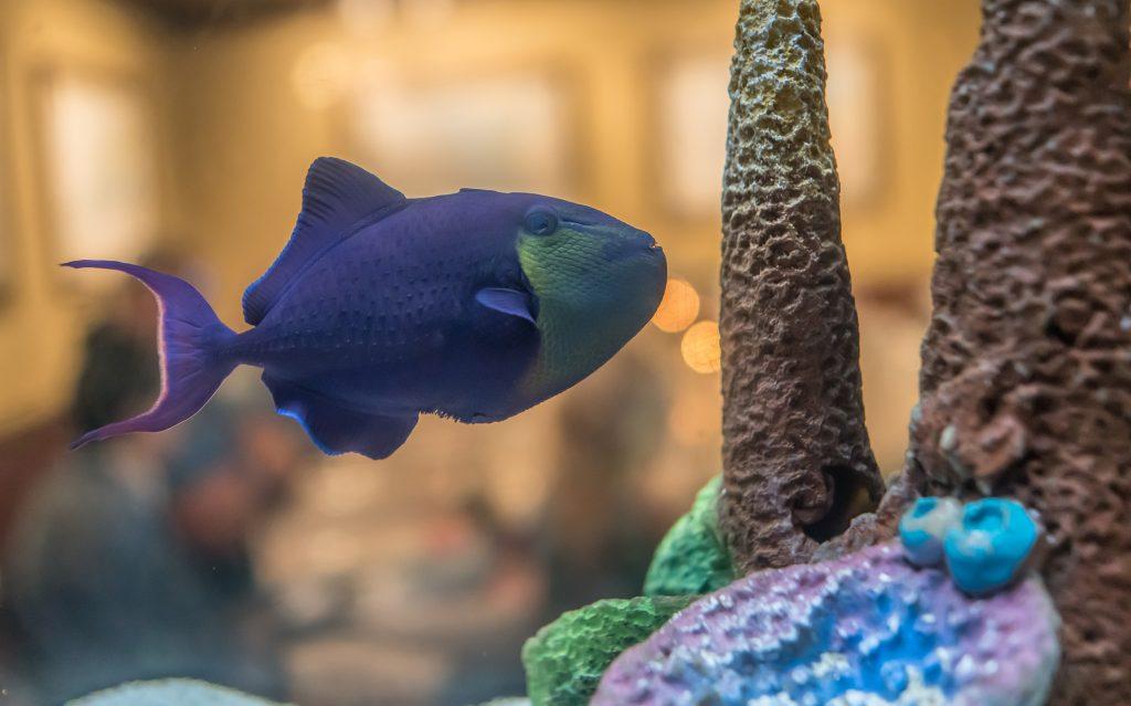 Найдены рыбы, способные перемещаться по суше