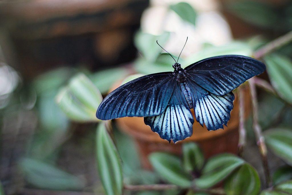 В Якутии нашли новый подвид редчайшей арктической бабочки