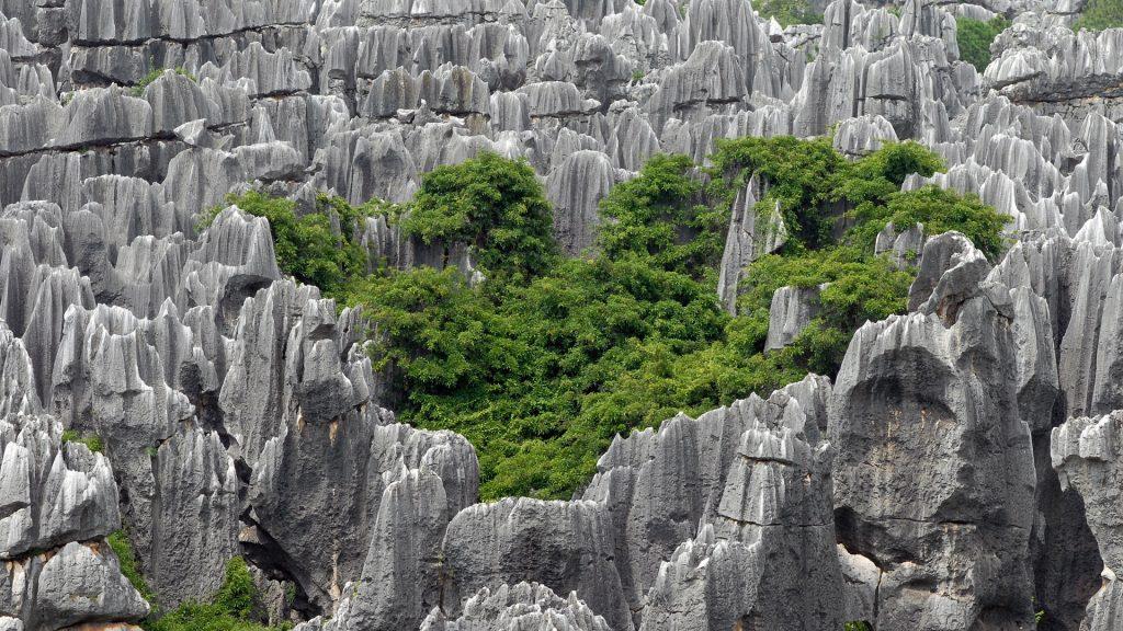 Ученые узнали, как образуются каменные леса