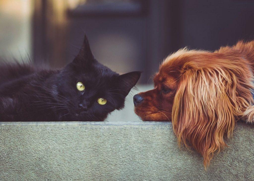 Ветеринары Ленобласти объяснили почему нужно стричь ногти кошкам и собакам