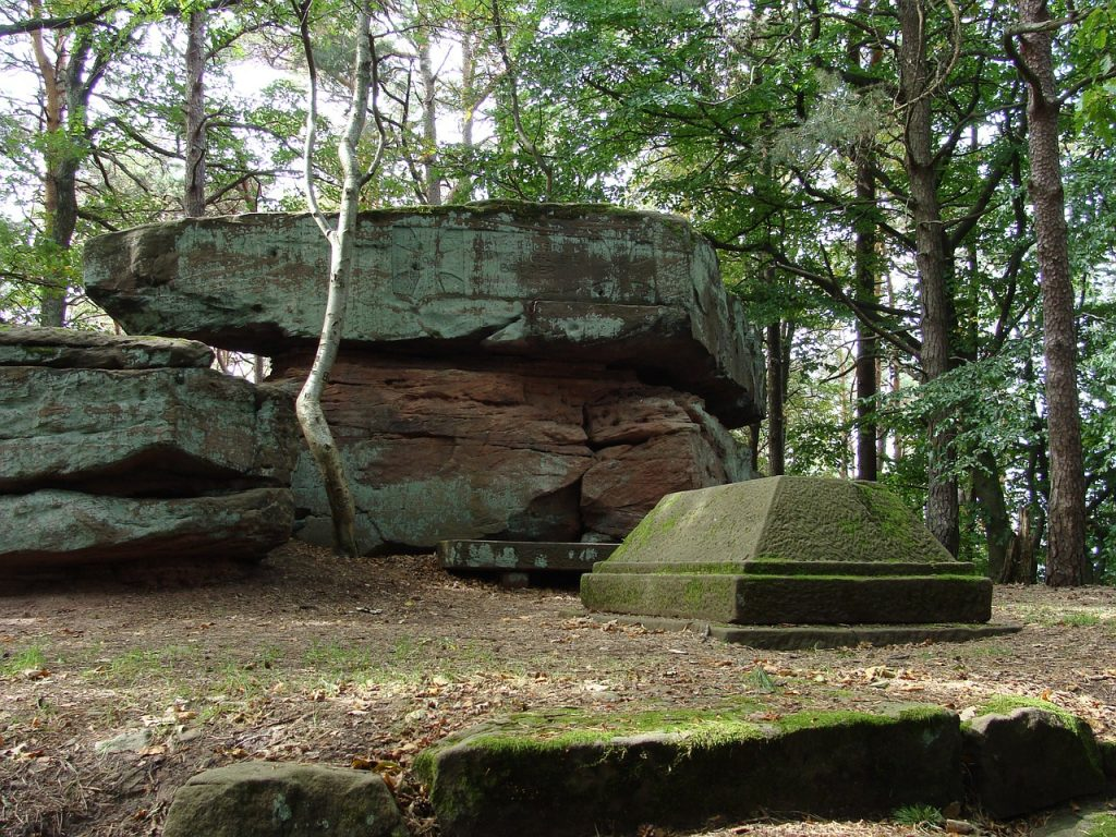 Ученые изобрели быстро разлагающийся гроб из грибов