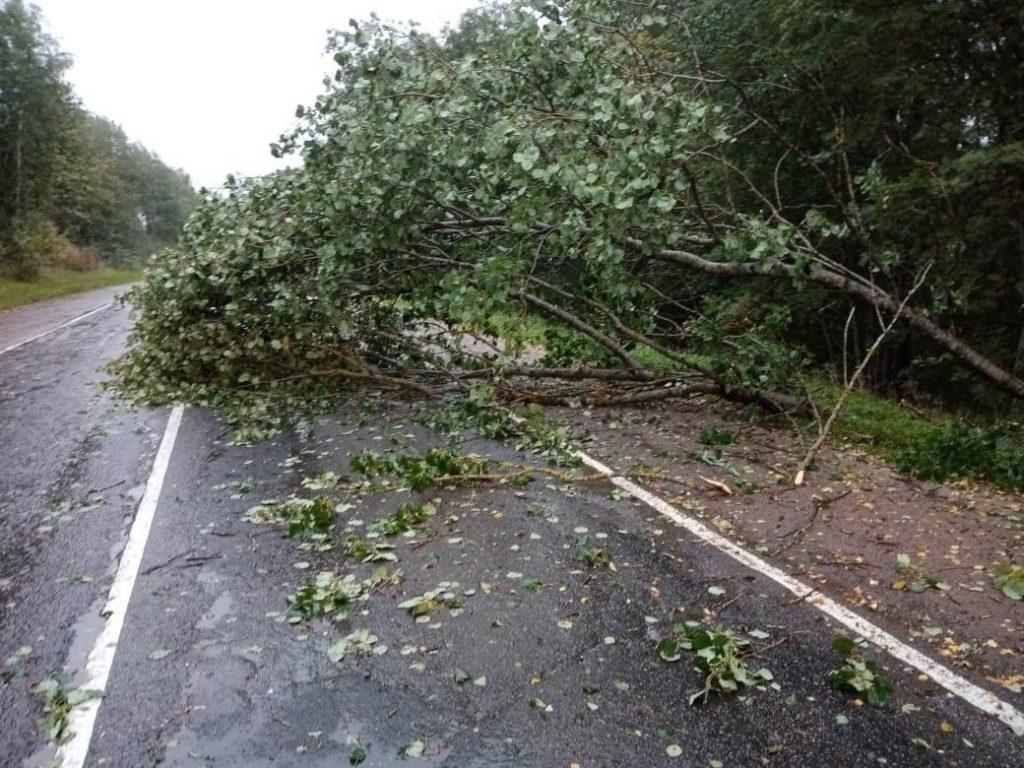 Дорожники убрали с трасс 220 поваленных деревьев