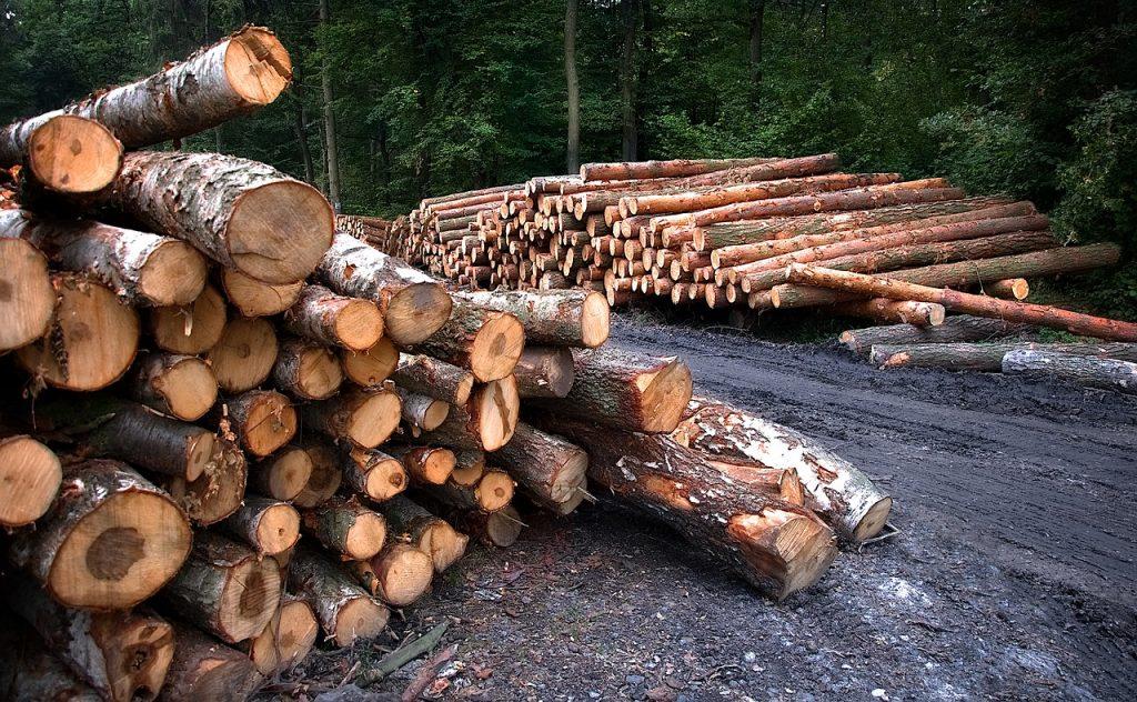 УФАС Ленобласти выявила нарушения в закупках на лесоустроительные работы