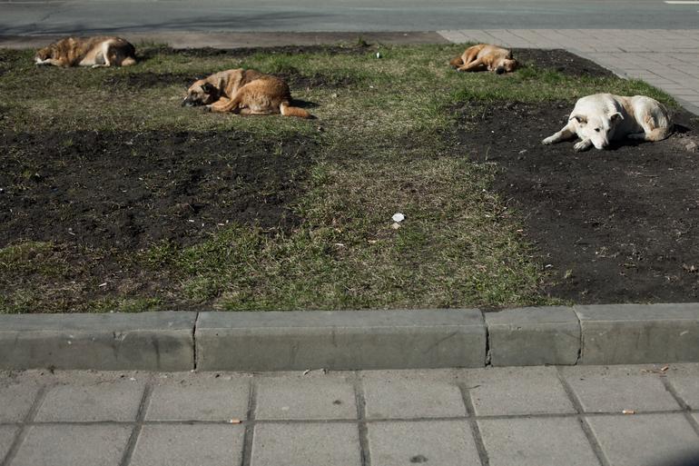 Семьсот собак из приюта в Ленобласти могут оказаться на улице