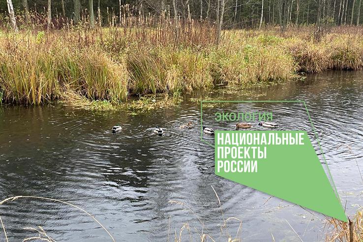 В Гатчине начали очистку водоемов музея-заповедника за 91 млн рублей
