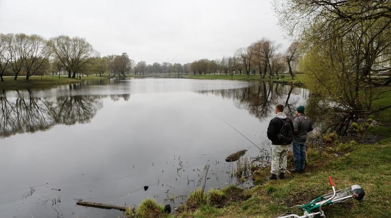 Аномальная жара в Петербурге привела к уменьшению уровня кислорода в водоемах