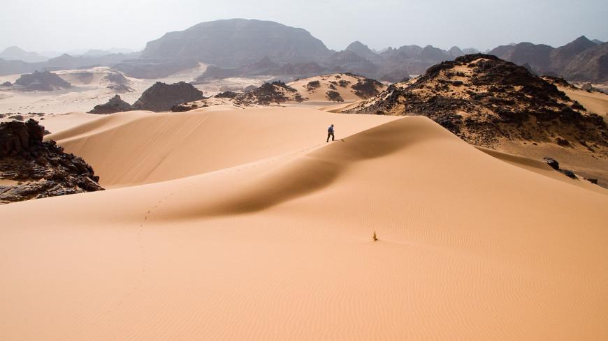В пустыне Сахара обнаружили почти два миллиарда деревьев