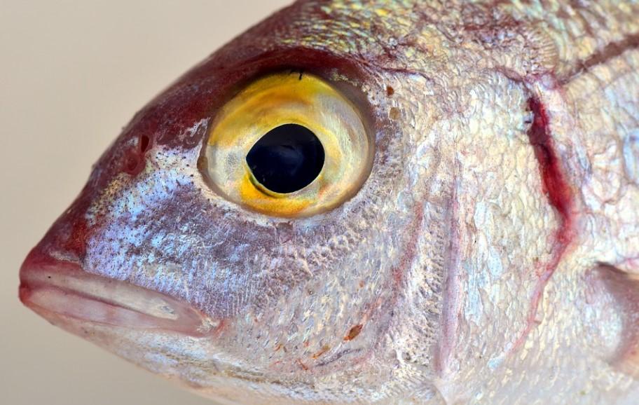 Рыбья чешуя подсказала ученным, как ускорить самолёты
