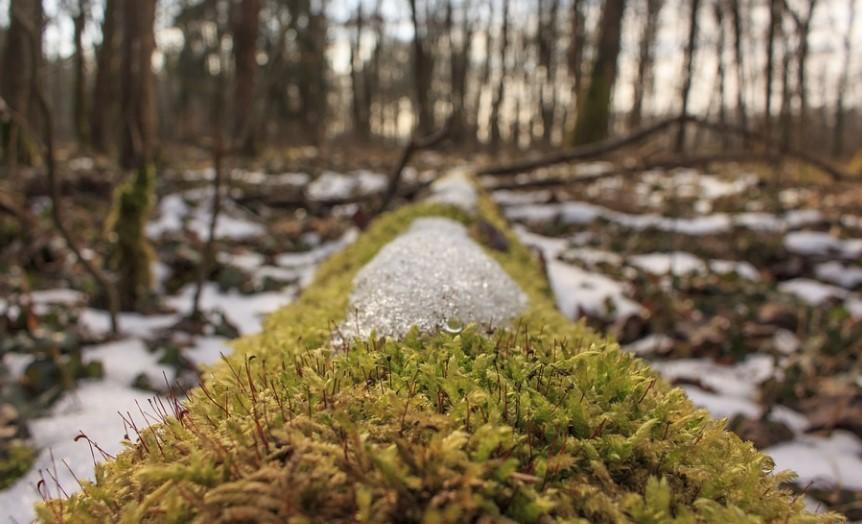 В воскресенье Ленобласть ожидает минусовая температура и мокрый снег