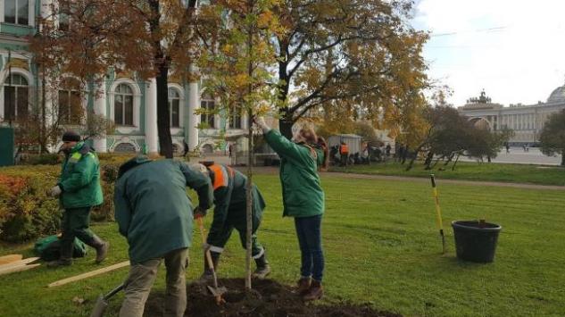 Почти 5 тысяч деревьев и 15 тысяч кустов высадили в Петербурге в октябре