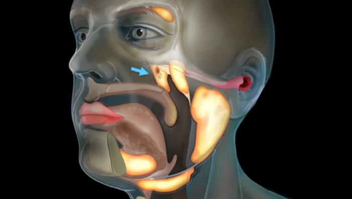 Ученые изобрели устройство, которое позволяет полностью парализованным общаться ухом