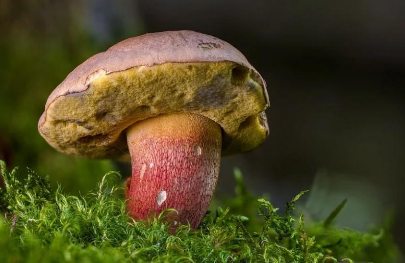 Российские ученые открыли новый вид грибов