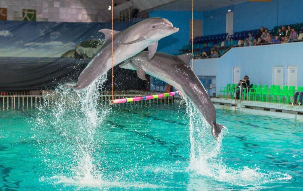 Больные дети Петербурга могут лишиться дельфинотерапии