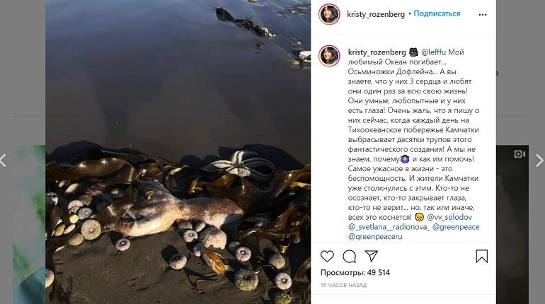 РАН сделала водоросли виноватыми в экокатастрофе на Камчатке