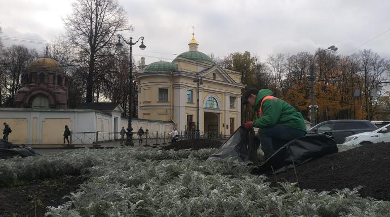 На площади Александра Невского высадили 10 тыс. тюльпанов