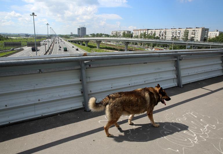 В Петербурге построят три государственных приюта для животных