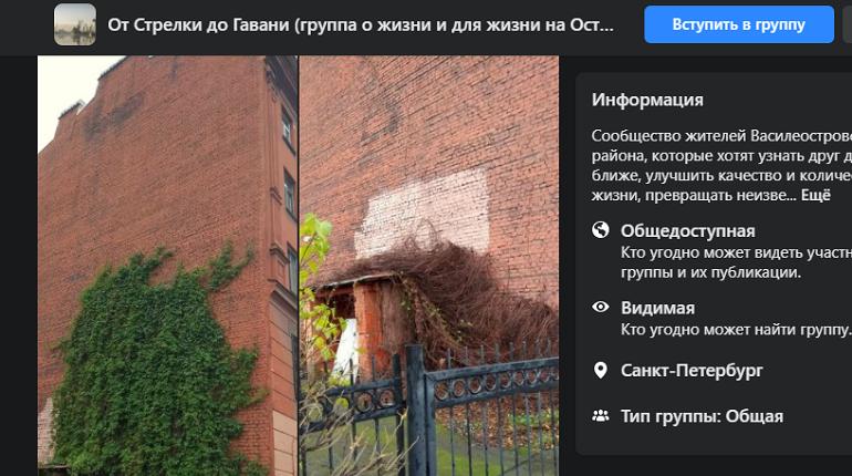На Васильевском со стены упал «девичий» виноград