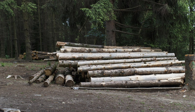 В Киришах бизнесмены незаконно вырубили деревьев на 4,7 млн рублей