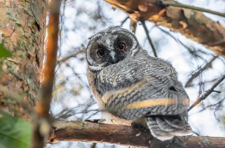 Биолог назвал животных и птиц, которых можно увидеть в Петербурге зимой