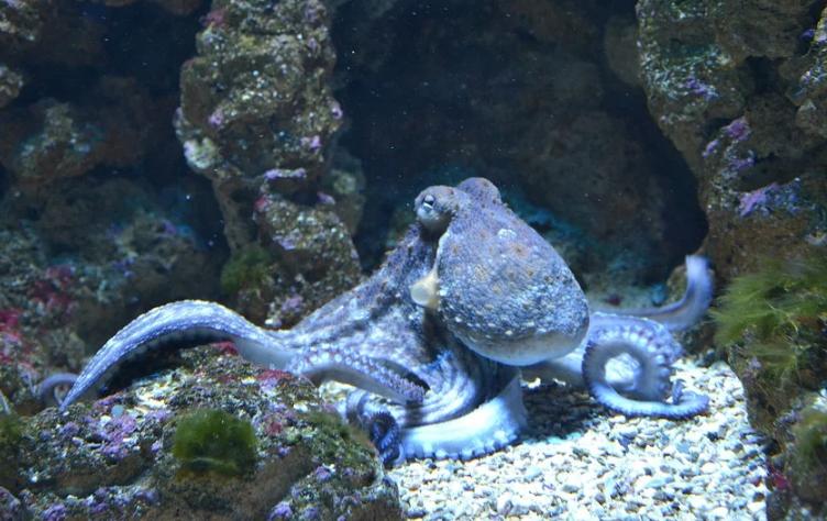 Учёные выяснили, что сны осьминогов могут быть похожи на клипы и GIF-изображения