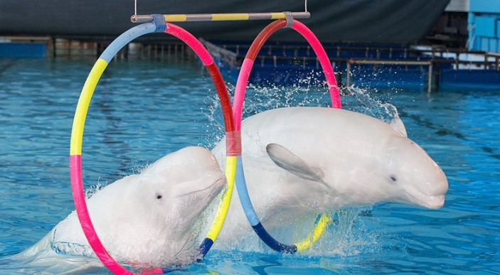 Петербуржцы снова посетят дельфинарий не раньше 2024 года