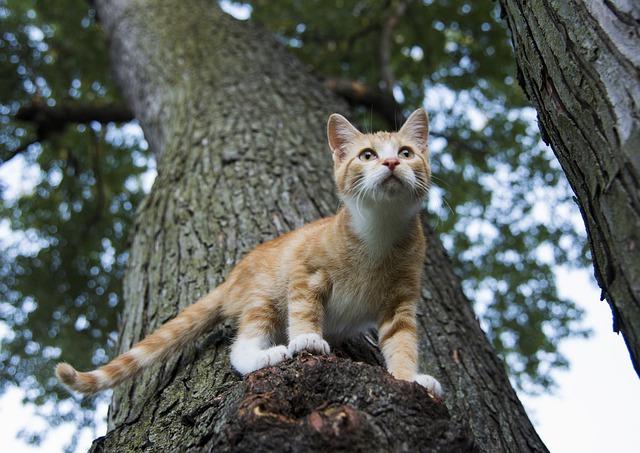 Волонтеры «Кошкиспаса» объяснили Лебедеву, зачем надо снимать котиков с деревьев