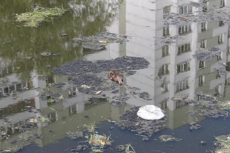 ОНФ назвал три самых грязных реки Петербурга