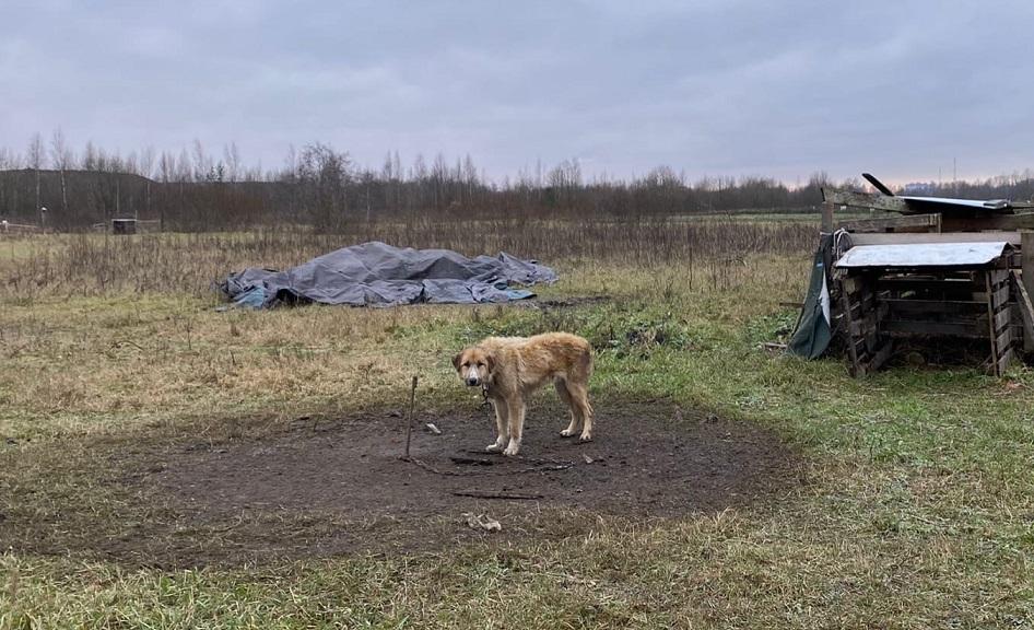 Петербуржец выстроил живую «изгородь» из 30 умирающих собак