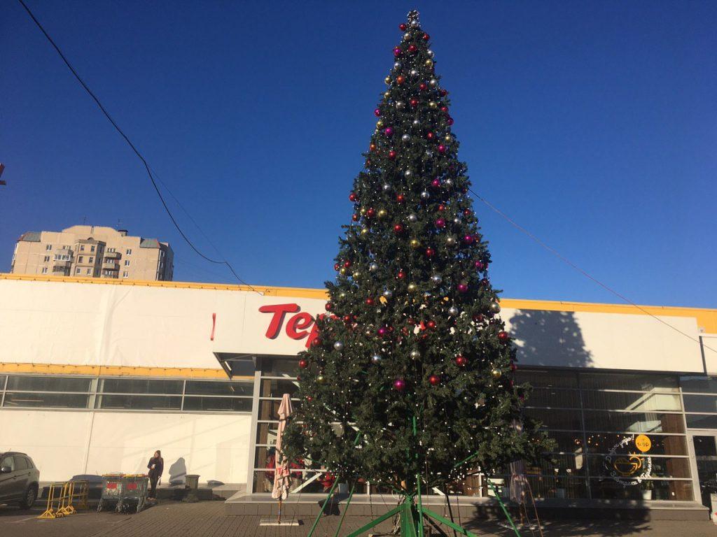 Новогодние елки начинают появляться на петербургских улицах