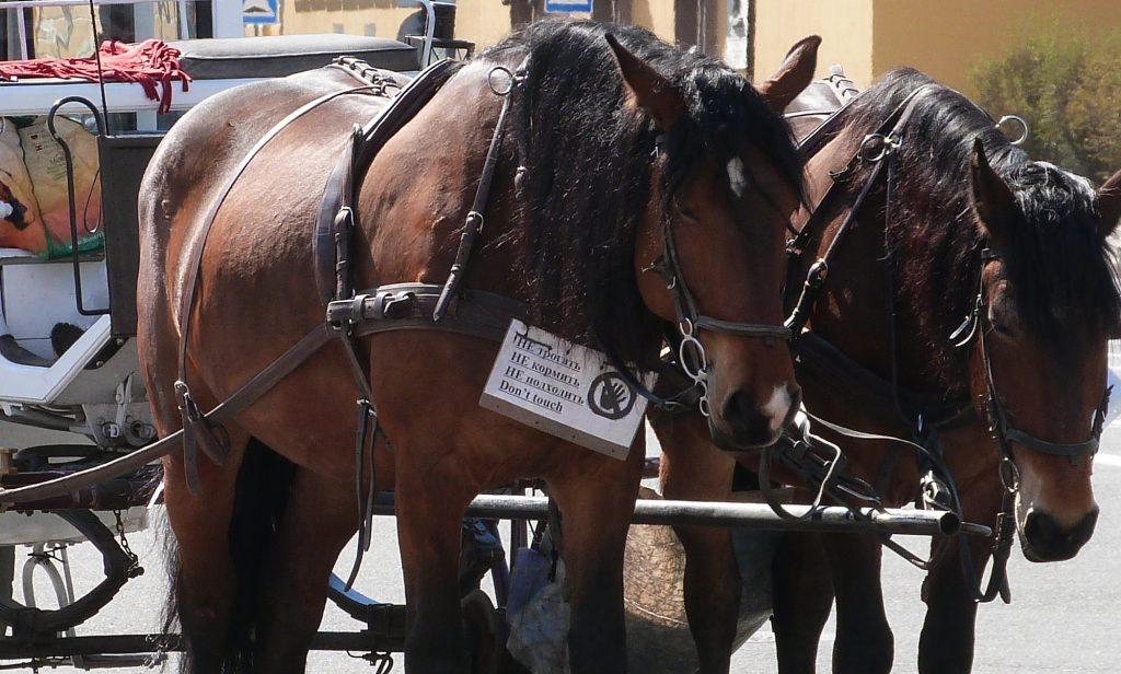 В зоомагазине США продают препарат для лечения глистов у лошадей лишь тем, кто показывает фото со своим конём