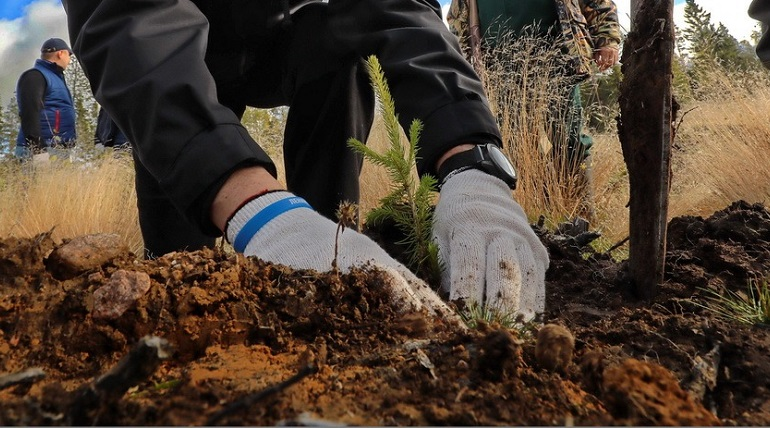 «Лысые» земли Ленобласти обросли 425 гектарами леса