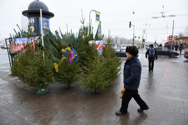 Ёлки в горшках лишают убыточные российские лесхозы единственного новогоднего заработка