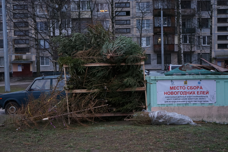 «Ёлки, палки и щепа»: петербуржцы снова накормят новогодними деревьями животных