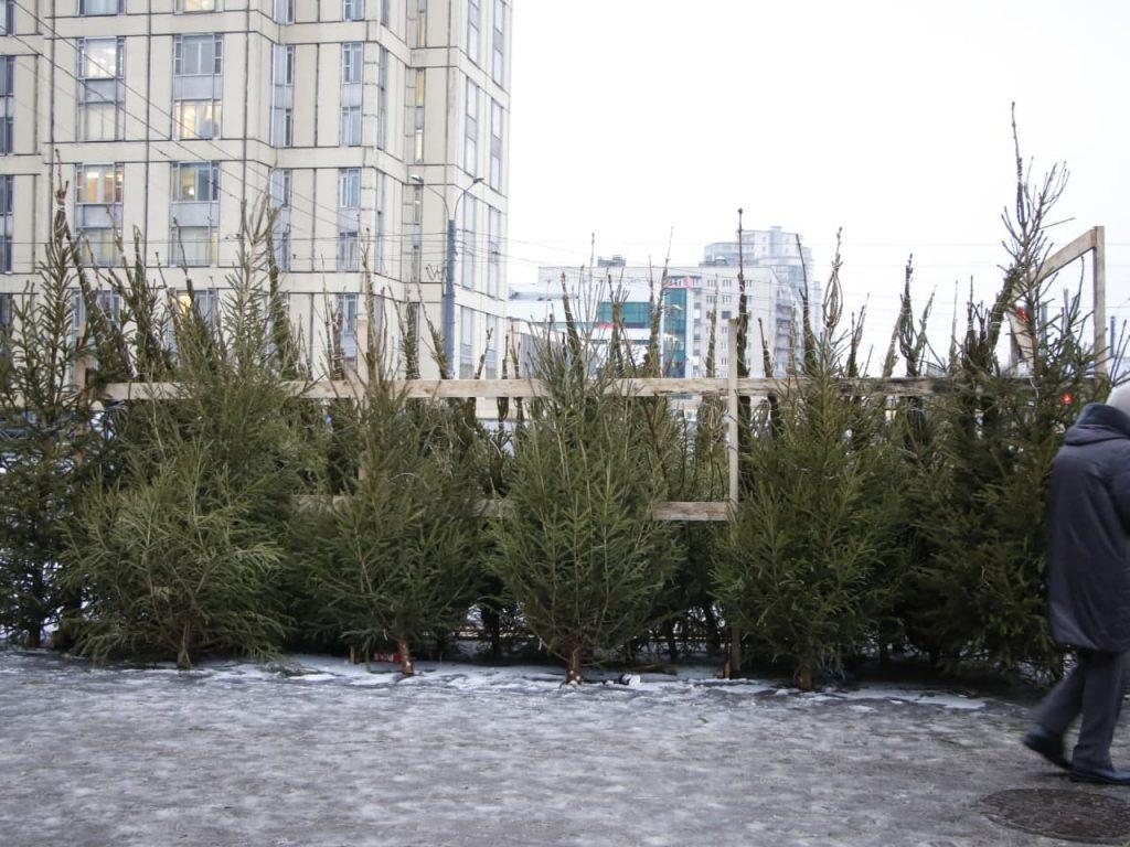 В Петербурге заработали пункты по приему отслуживших новогодних елок