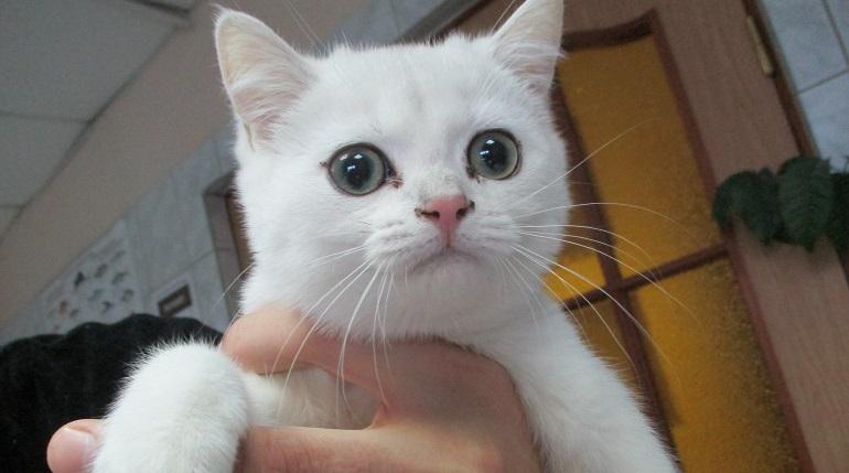 800 петербургских котиков останутся с яйцами: Смольный не нашел достойного кастратора